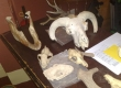 animal-bones-identification-4